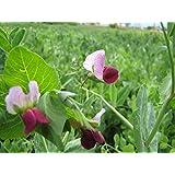 Plentree Seeds Package: 60 Grams SeedsGreen Peas (Small) Wild