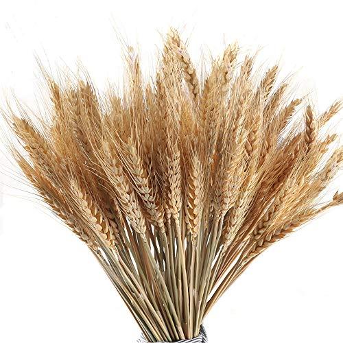 MHMJON 100 Pcs Dried Wheat Sheaves Bundle Golden Natural Wheat Bouquet Bunch Atifical Flowers Full Arrangement DIY Design Home Table Wedding Party Centerpieces Decorative