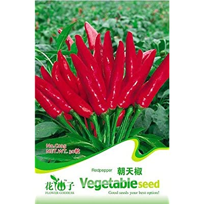 Business sasha Each Pack 30+ Seeds Heirloom Vegetable Chinese Super Pungency Red Pepper Seeds (1) : Garden & Outdoor