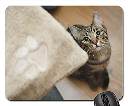 Amazon com: Mouse Pads - Cat Kitten Bury Cat Domestic Cat