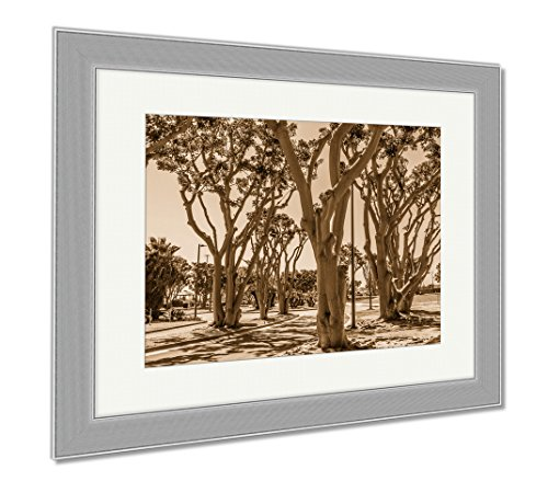 Ashley Framed Prints Coral Trees Lining A Street At Embarcadero Park South In San Diego California, Contemporary Decoration, Sepia, 26x30 (frame size), Silver Frame, - Coral Springs The Promenade