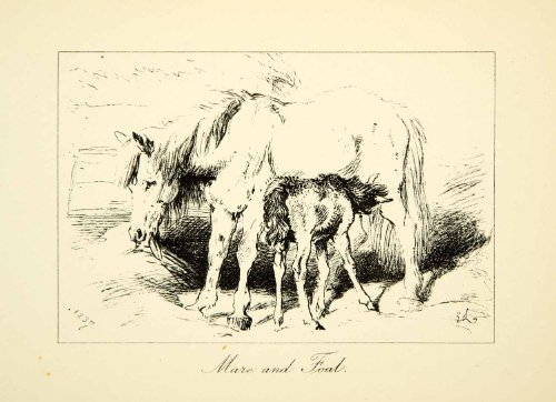 1883 Photolithograph Mare Foal Sir Edwin Landseer C G Lewis Horse Baby Animal - Orig. Photolithograph from PeriodPaper LLC-Collectible Original Print Archive