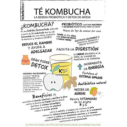 Kombtuxa - Green (Té Ecológico Kombucha de Albahaca y Té Matcha) - 275 mililitros: Amazon.es: Alimentación y bebidas