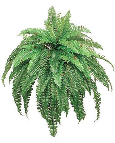 fern bush - 8