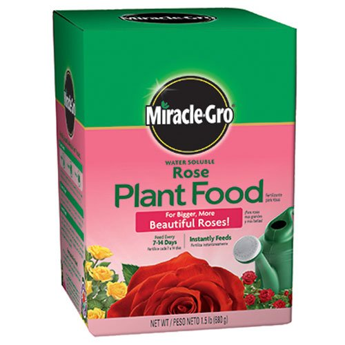 Miracle-Gro Rose Plant Food, 1.5-Pounds (Rose Fertilizer) (Best Manure For Roses)