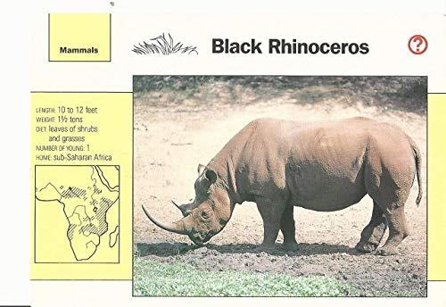 1992 Grolier, Wildlife Adventure Cards, Animals, 4.7 Black Rhinoceros ()