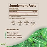 Stone Breaker Chanca Piedra Extract 1000mg
