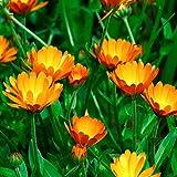 Nature's Answer Calendula Flower with Organic