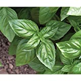 David's Garden Seeds Herb Basil Genovese OS911 (Green) 500 Organic Seeds