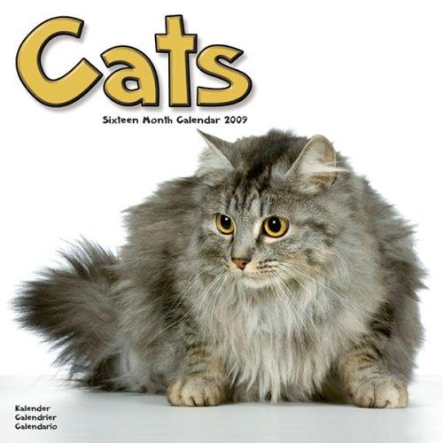 2009 Cats Wall Calendar