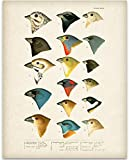 Best Home-X Bird Houses - 1905 North American Birds Illustration - 11x14 Unframed Review