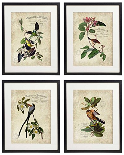 IDIOPIX Vintage Bird & Botanical Home Décor Wall Art Print No.9 Set of 4 Prints UNFRAMED