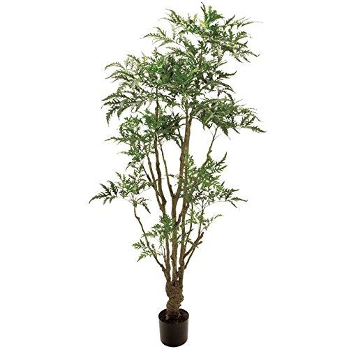 人工観葉植物 アラレアエレガント 高さ180cm fg1587 B071W2Q5L3