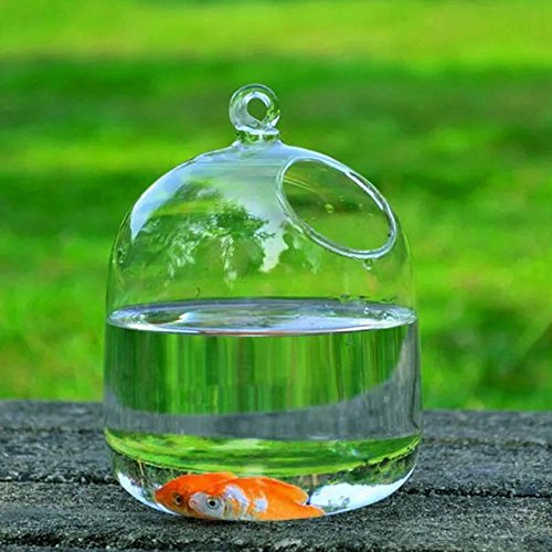 Amazon.in & Buy SOLEDI Glass Hanging Flower Vase Fish Tank(Transparent ...