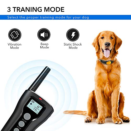 Buy shock collar for large dogs