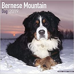 Bernese Mountain Dog Calendar Dog Breed Calendars 2018