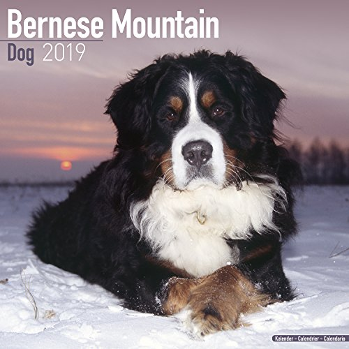 (Bernese Mountain Dog Calendar - Dog Breed Calendars - 2018 - 2019 Wall Calendars - 16 Month by)