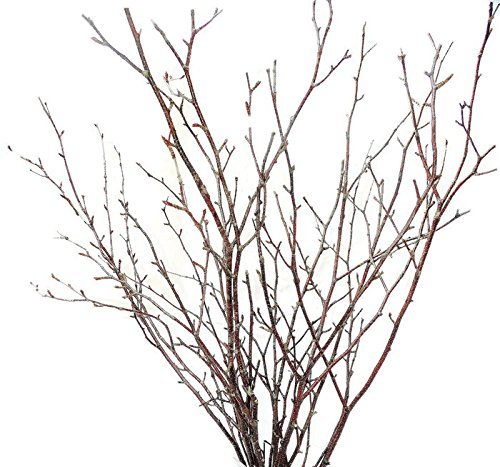 Natural Birch Branches