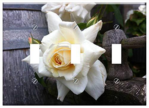 Toggle - Rose Spray Rose Rambler Champagne Rose Garden Plant ()