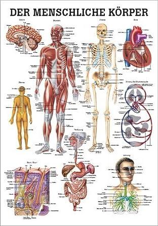 Ruediger Anatomie MIPO52LAM Der Menschliche Körper Tafel, 24 cm x 34 ...