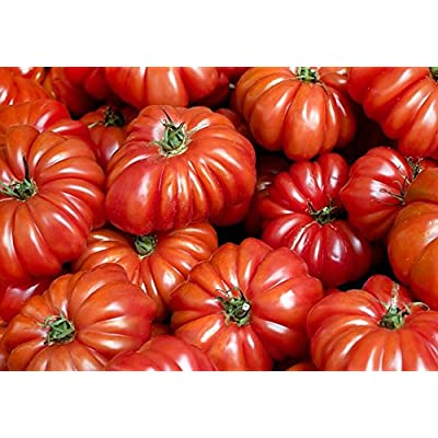 30+ ORGANICALLY Grown Costoluto Genovese Pomodoro Tomato Seeds, Heirloom Non-GMO, Low Acid, Indeterminate, Open-Pollinated, Productive, from USA : Garden & Outdoor