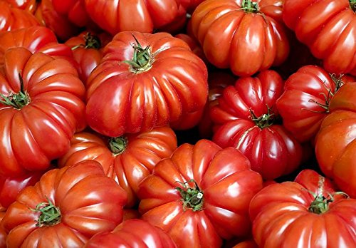 30+ ORGANICALLY GROWN Costoluto Genovese Pomodoro Tomato Seeds, Heirloom NON-GMO, Low Acid, Indeterminate, Open-Pollinated, Productive, From USA (Indeterminate Tomato Plants)