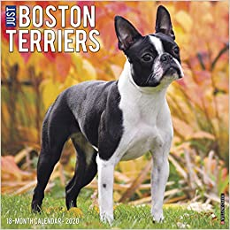 Boston Calendar 2020 Just Boston Terriers 2020 Wall Calendar (Dog Breed Calendar