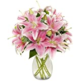 Benchmark Bouquets 8 Stem Stargazer Lily Bunch, With Vase