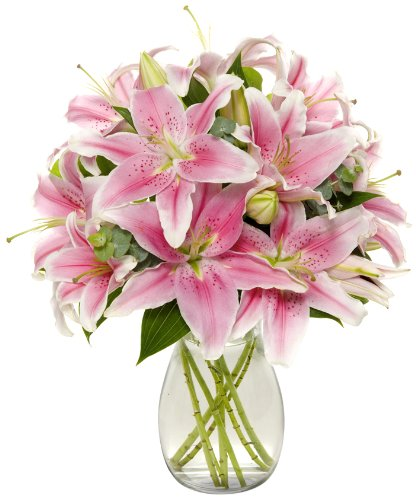 Benchmark Bouquets 8 Stem Stargazer Lily Bunch, With Vase (Fresh Cut Flowers) by Benchmark Bouquets
