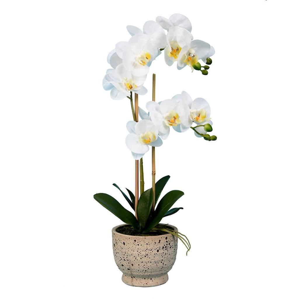 Vickerman FN181301 White Orchid Everyday Floral by Vickerman