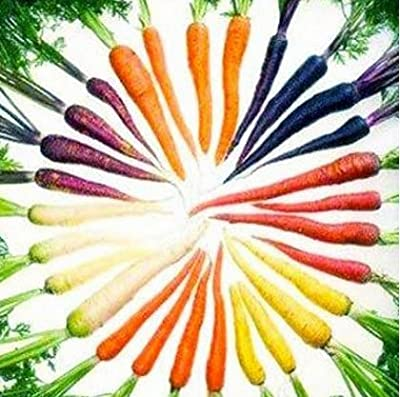 Mr.seeds 50 seeds/pack Bonsai Rainbow Carrot seeds Rare Chinese Vegetable Seeds-Healthy Organic Sugar Carrot seeds