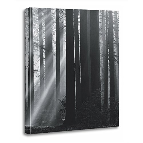 (TORASS Canvas Wall Art Print Black Sunlight in Forest White Photography Vintage Spirituality Artwork for Home Decor 12