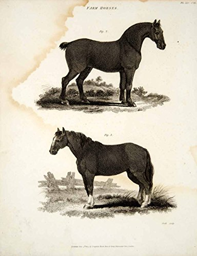 1807 Copper Engraving Cleveland Bay Suffolk Punch Sorrel Horse Breed Animal TCF1 - Original Copper Engraving from PeriodPaper LLC-Collectible Original Print Archive