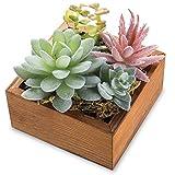 MyGift Assorted Desert Succulent Plant Arrangement in Rustic Wooden Box Planter