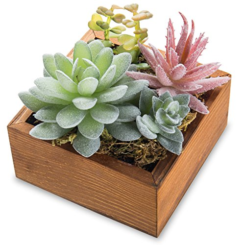- MyGift Echeveria Elegans & Succulent Plant Arrangement in Rustic Wooden Box Planter