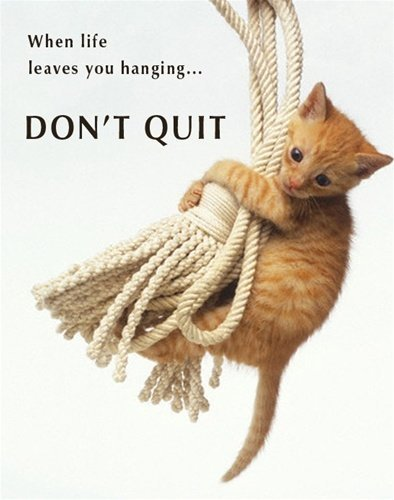 Don't Quit Kitten Inspirational Animal Photography Poster Print Decorative