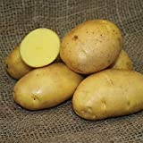 buy SEED POTATOES - 1 lb German Butterball * Organic Grown * Non GMO * Virus & Chemical Free * Ready for Spring Planting * now, new 2018-2017 bestseller, review and Photo, best price $11.29