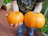 Orange Kentucky Beefsteak Tomato Seeds- Organic- 25+ Seeds