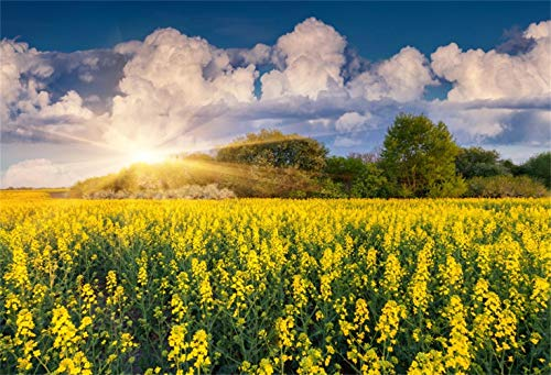 Laeacco 8x6.5ft Beautiful Cole Flower Field Background Wild Spring Scenic Vinyl Photography Backdrop Dazzling Sunshine White Clouds Wedding Photo Shoot Personal Portraits Studio Natural Scene