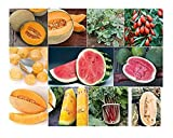buy David's Garden Seeds Collection Set Fruit NEP2233 (Multi) 10 Varieties 800 Seeds (Non-GMO, Open Pollinated, Heirloom, Organic) now, new 2019-2018 bestseller, review and Photo, best price $29.95