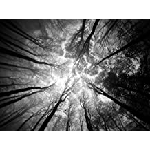 """J.P. London MACR1X31004 JPL and Ajven Present Tree Tops Sky Branches Cloud Reach Black White 36""""x24"""", 1/8"""" Thick Solid Acrylic High Definition Wall-Art"""