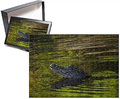 Photo Jigsaw Puzzle of USA; Florida; St. Augustine; Alligator in the rookery at the Alligator Farm - Alligator Puzzle