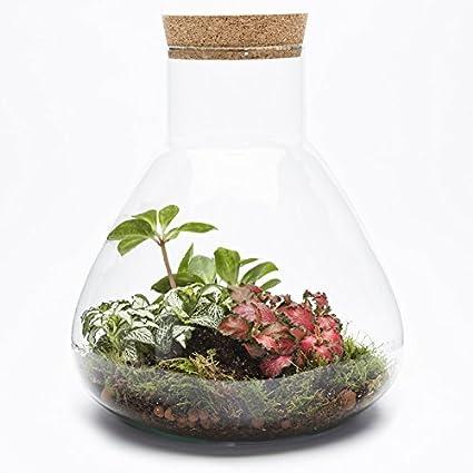 The Urban Botanist Cork Sealed Ecosystem Conical Terrarium Flask