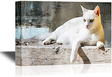 Cats White Cat Lying with Vintage Wall Background