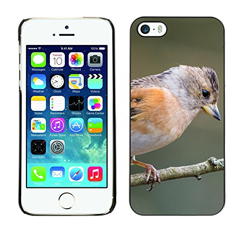 Premio Sottile Slim Cassa Custodia Case Cover Shell // F00023639 oiseau Brabling // Apple iPhone 5 5S 5G