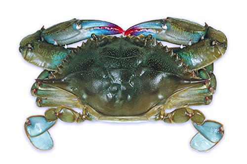Jumbo Crab - 3