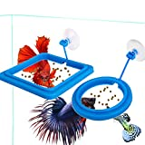 FLOURITHING 2 Pcs-Set Aquarium Fish Tank Betta Fish Feeding Ring Floating Station Food Tary Square with Suction Cup -Suitable for Flakes & Other Floating Fish Foods- Reward Superfine Fiber Towels (A)