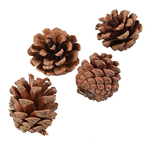 4pcs/pack Pine Cones Chew Toys for Small Pet Hamster Chinchillas Guinea Pig