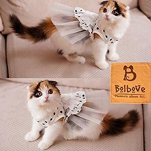 Cat in wedding dresswedding dressesdressesss cat in wedding dress junglespirit Choice Image