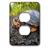 3dRose LLC lsp_92481_6 Usa, New Jersey, Great Swamp Nwr. Spotted Turtle - Us31 Jgl0038 - Jim Gilbert 2 Plug Outlet Cover